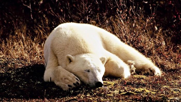 animals-sleeping_00354308