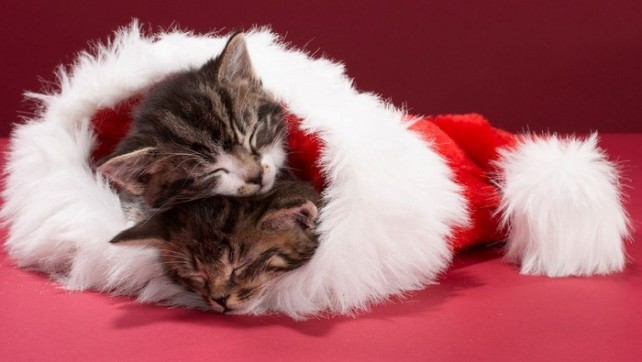 PróximoNível ao Domingo T4 – Artigo 16: Especial Natal 2014