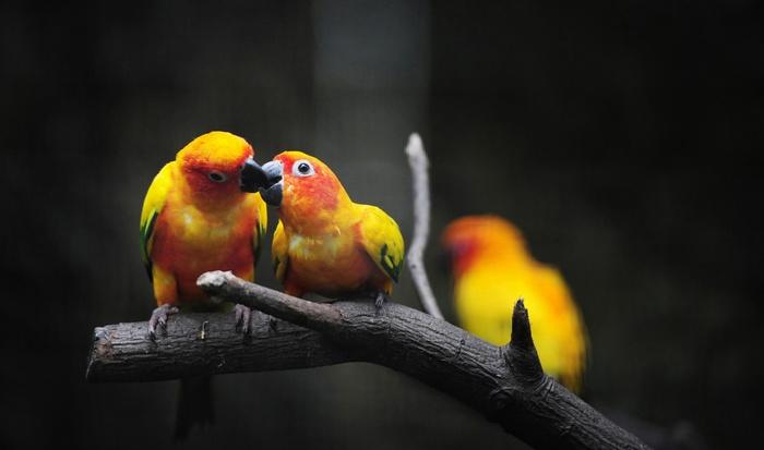 beijo-passaros--cinema-img1